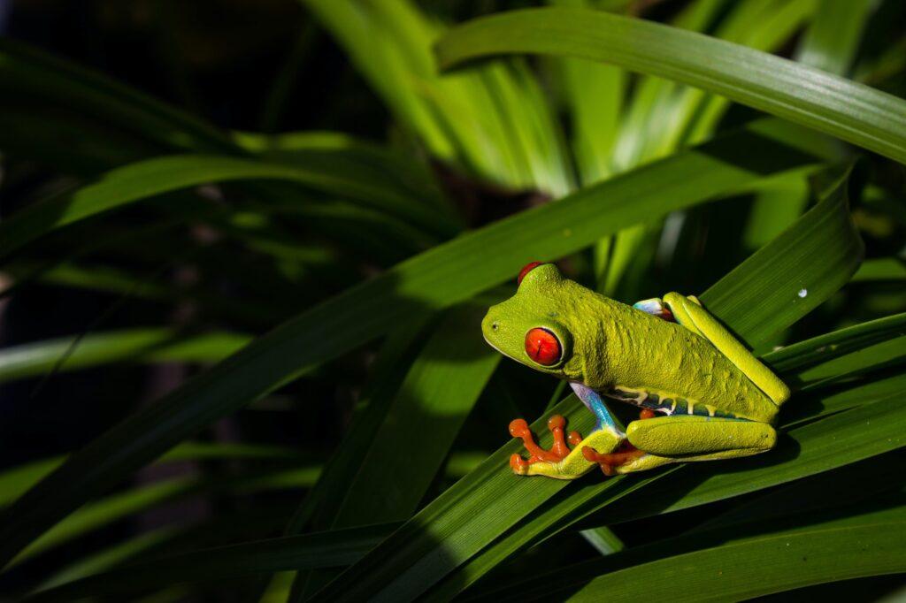 In Costa Rica